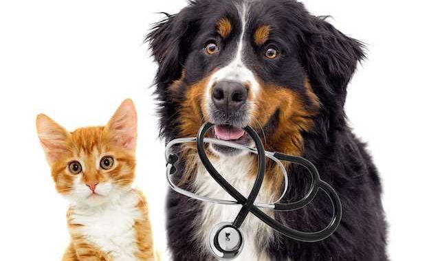 Pet Insurance – How It Works and If It's Worth It