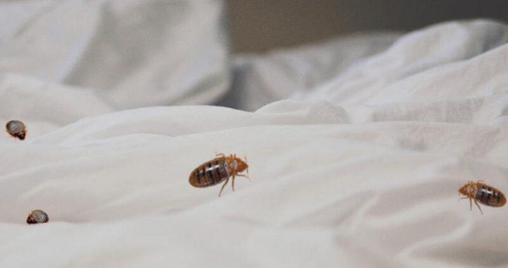 Buyer Beware – Bed Bugs